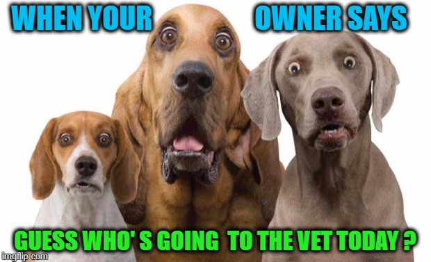 Dogs Surprised | WHEN YOUR                   OWNER SAYS GUESS WHO' S GOING  TO THE VET TODAY ? | image tagged in dogs surprised | made w/ Imgflip meme maker