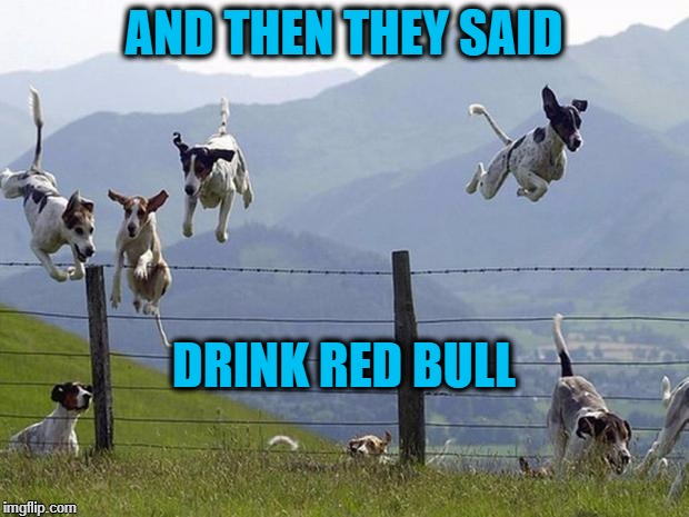 DOGS | AND THEN THEY SAID DRINK RED BULL | image tagged in dogs | made w/ Imgflip meme maker