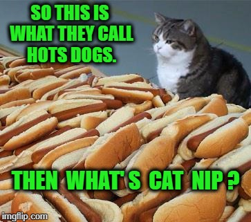 Too many hot dogs | SO THIS IS WHAT THEY CALL HOTS DOGS. THEN  WHAT' S  CAT  NIP ? | image tagged in too many hot dogs | made w/ Imgflip meme maker
