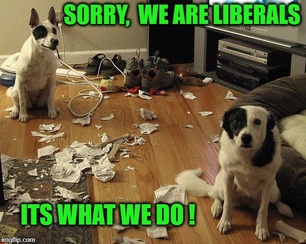 guiltydogs | SORRY,  WE ARE LIBERALS ITS WHAT WE DO ! | image tagged in guiltydogs | made w/ Imgflip meme maker
