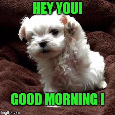 Don't like dogs | HEY YOU! GOOD MORNING ! | image tagged in don't like dogs | made w/ Imgflip meme maker