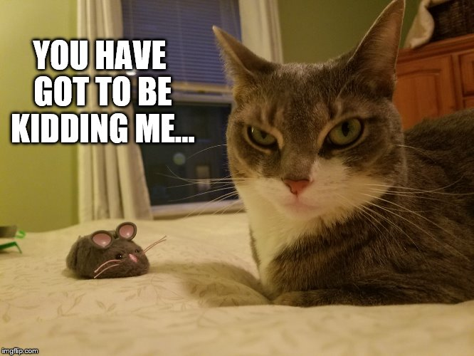 Funny Cat Meme Generator : You have got to be kidding me. imgflip