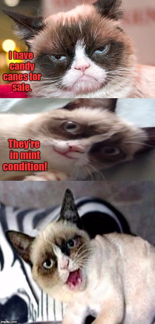 Bad Pun Grumpy Cat | I have candy canes for sale. They're in mint condition! | image tagged in bad pun grumpy cat,grumpy cat,memes | made w/ Imgflip meme maker
