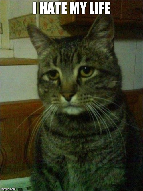 Depressed Cat |  I HATE MY LIFE | image tagged in memes,depressed cat | made w/ Imgflip meme maker