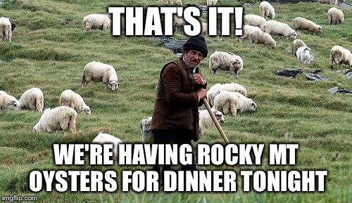 THAT'S IT! WE'RE HAVING ROCKY MT OYSTERS FOR DINNER TONIGHT | made w/ Imgflip meme maker