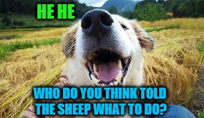 HE HE WHO DO YOU THINK TOLD THE SHEEP WHAT TO DO? | made w/ Imgflip meme maker