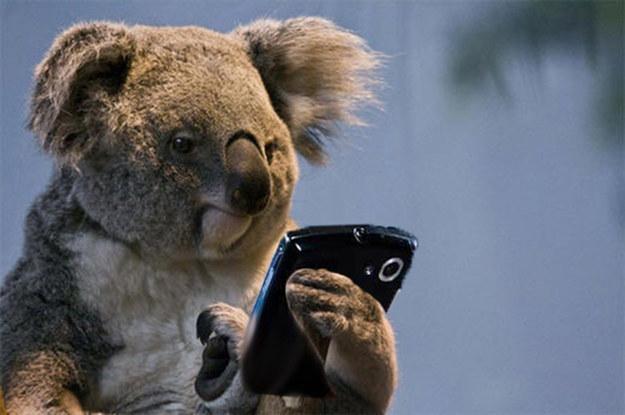 Smartphone koala Blank Template - Imgflip