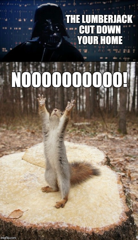 Poor squirrel  | THE LUMBERJACK CUT DOWN YOUR HOME NOOOOOOOOOO! | image tagged in squirrel week,squirrels,star wars no,darth vader,jbmemegeek | made w/ Imgflip meme maker