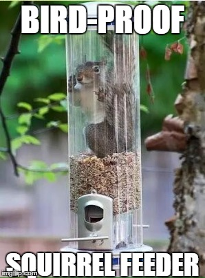 everyone should have one for squirrel week! | BIRD-PROOF SQUIRREL FEEDER | image tagged in squirrel week,squirrel,nuts | made w/ Imgflip meme maker