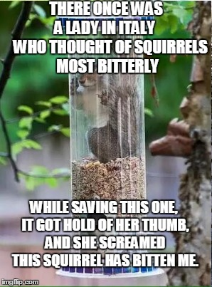 hard to find anything that rhymes with squirrel! | THERE ONCE WAS A LADY IN ITALY    WHO THOUGHT OF SQUIRRELS MOST BITTERLY WHILE SAVING THIS ONE, IT GOT HOLD OF HER THUMB, AND SHE SCREAMED  | image tagged in squirrel week,limerick week | made w/ Imgflip meme maker