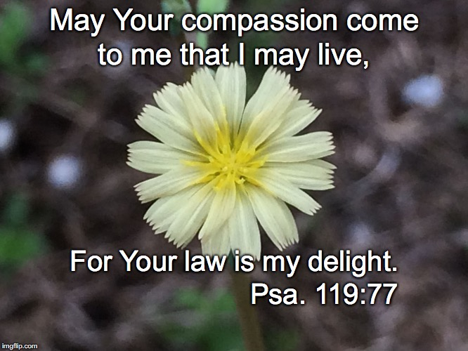 May Your compassion come to me that I may live, For Your law is my delight. Psa. 119:77 | image tagged in compassion | made w/ Imgflip meme maker