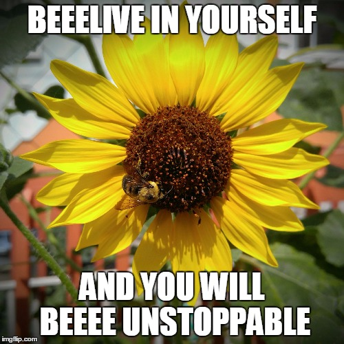Sunflower and Bee | BEEELIVE IN YOURSELF AND YOU WILL BEEEE UNSTOPPABLE | image tagged in sunflower and bee | made w/ Imgflip meme maker
