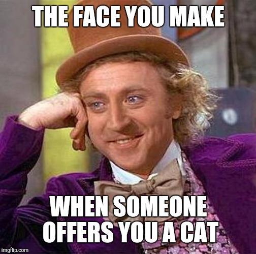 Creepy Condescending Wonka Meme | THE FACE YOU MAKE WHEN SOMEONE OFFERS YOU A CAT | image tagged in memes,creepy condescending wonka | made w/ Imgflip meme maker