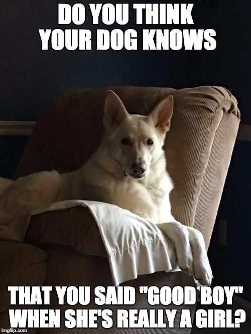 Dog Good Boy Meme