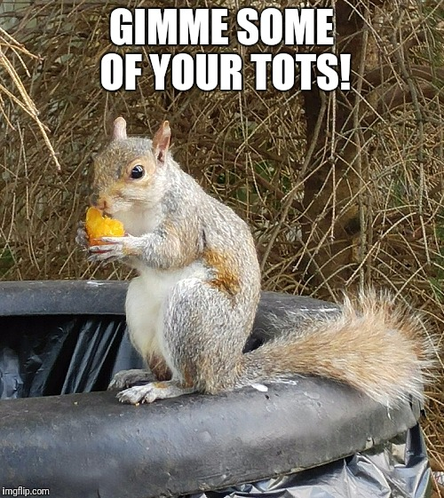 Gimme some of your tots!  | GIMME SOME OF YOUR TOTS! | image tagged in squirrel eating tots,tots,squirrel,sonic,funny,animals | made w/ Imgflip meme maker