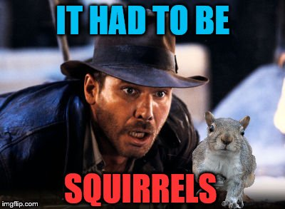 Squirrels, I hate squirrels | IT HAD TO BE SQUIRRELS | image tagged in indiana jones snakes,squirrel week | made w/ Imgflip meme maker