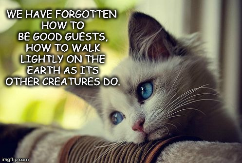 First World Problems Cat |  WE HAVE FORGOTTEN HOW TO BE GOOD GUESTS, HOW TO WALK LIGHTLY ON THE EARTH AS ITS OTHER CREATURES DO. | image tagged in memes,first world problems cat | made w/ Imgflip meme maker