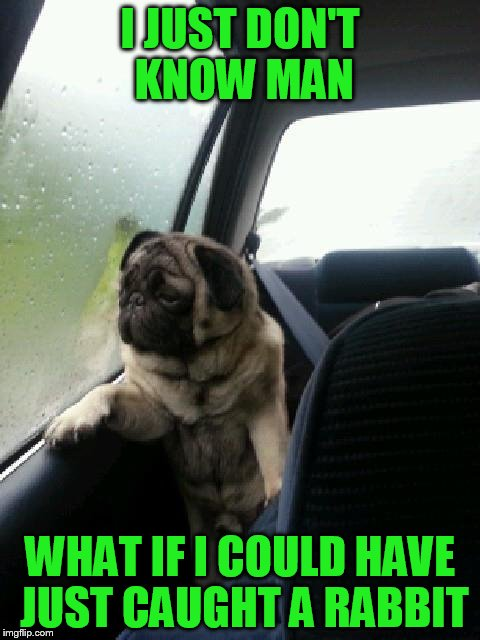 Introspective Pug | I JUST DON'T KNOW MAN WHAT IF I COULD HAVE JUST CAUGHT A RABBIT | image tagged in introspective pug | made w/ Imgflip meme maker