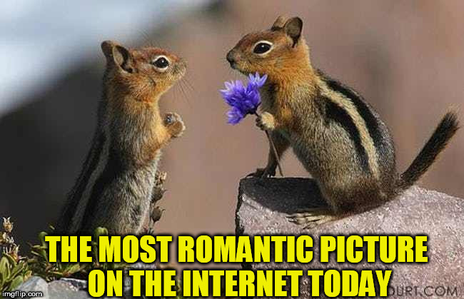 Romantic | THE MOST ROMANTIC PICTURE ON THE INTERNET TODAY | image tagged in romantic,squirrels | made w/ Imgflip meme maker