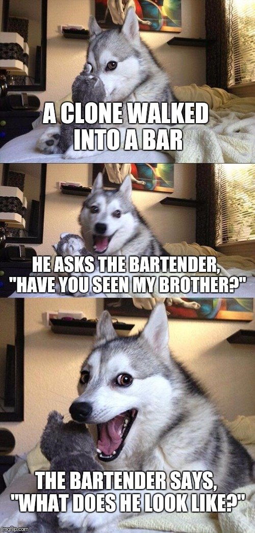"Bad Pun Dog Meme | A CLONE WALKED INTO A BAR HE ASKS THE BARTENDER, ""HAVE YOU SEEN MY BROTHER?"" THE BARTENDER SAYS, ""WHAT DOES HE LOOK LIKE?"" 