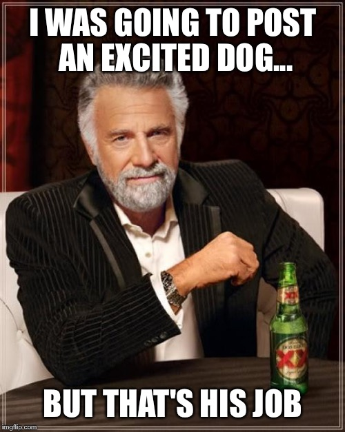 The Most Interesting Man In The World Meme | I WAS GOING TO POST AN EXCITED DOG... BUT THAT'S HIS JOB | image tagged in memes,the most interesting man in the world | made w/ Imgflip meme maker