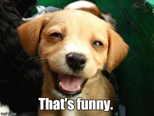 Dog Smiling | That's funny. | image tagged in dog smiling | made w/ Imgflip meme maker