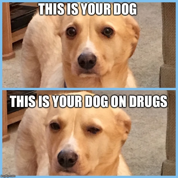 THIS IS YOUR DOG THIS IS YOUR DOG ON DRUGS | image tagged in dog on drugs | made w/ Imgflip meme maker