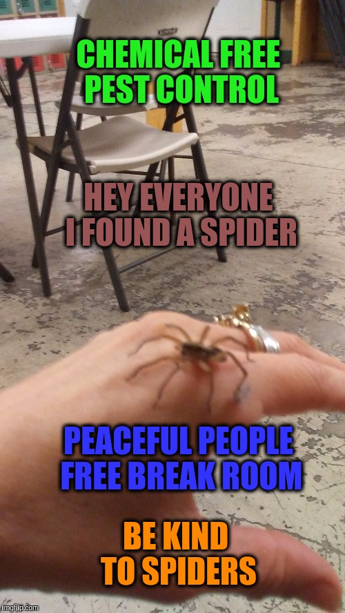 How to remove pests and bad chemistry from your break room | CHEMICAL FREE PEST CONTROL BE KIND TO SPIDERS PEACEFUL PEOPLE FREE BREAK ROOM HEY EVERYONE I FOUND A SPIDER | image tagged in be kind,break time,funny memes,giant spider,misunderstood spider,am i the only one around here | made w/ Imgflip meme maker