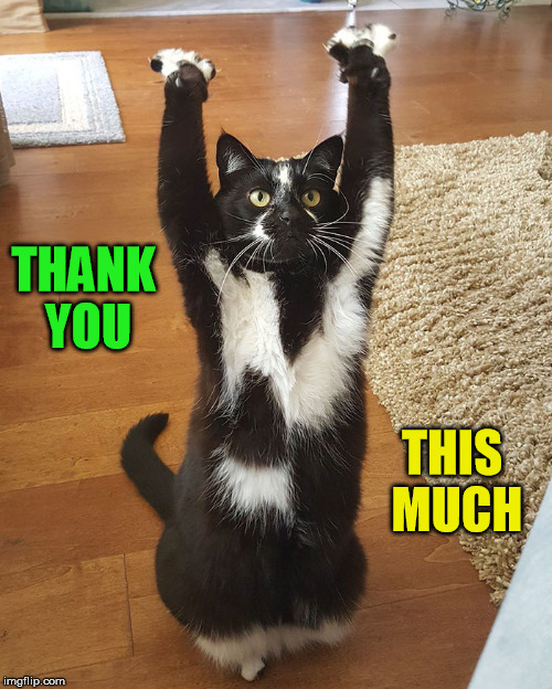 THANK YOU THIS MUCH | made w/ Imgflip meme maker