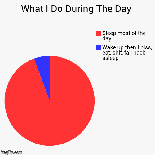 What I Do During The Day | Wake up then I piss, eat, shit, fall back asleep, Sleep most of the day | image tagged in funny,pie charts | made w/ Imgflip pie chart maker