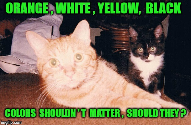 ORANGE , WHITE , YELLOW,  BLACK COLORS  SHOULDN ' T  MATTER ,  SHOULD THEY ? | image tagged in rusty  muffin | made w/ Imgflip meme maker