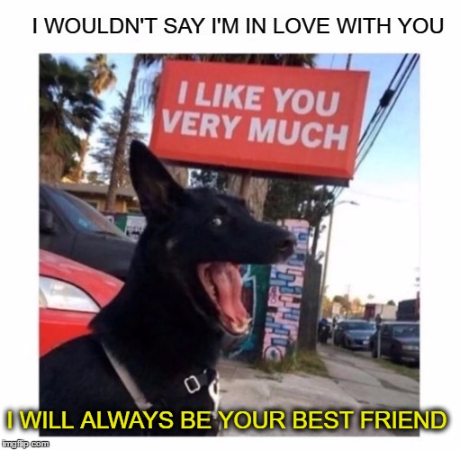 what girls said to me growing up  | I WOULDN'T SAY I'M IN LOVE WITH YOU I WILL ALWAYS BE YOUR BEST FRIEND | image tagged in memes,funny,dogs,best friends,so true memes | made w/ Imgflip meme maker