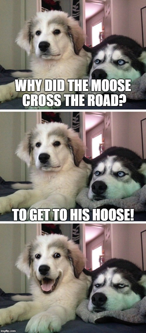 Bad pun dogs | WHY DID THE MOOSE CROSS THE ROAD? TO GET TO HIS HOOSE! | image tagged in bad pun dogs | made w/ Imgflip meme maker