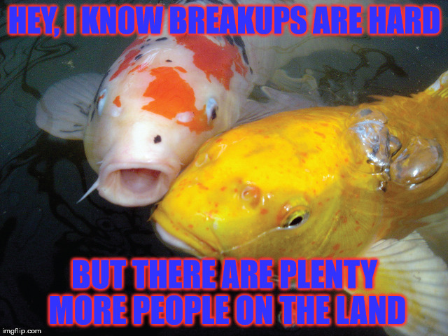 Fish breakup | HEY, I KNOW BREAKUPS ARE HARD BUT THERE ARE PLENTY MORE PEOPLE ON THE LAND | image tagged in breakup,fish,play on words | made w/ Imgflip meme maker