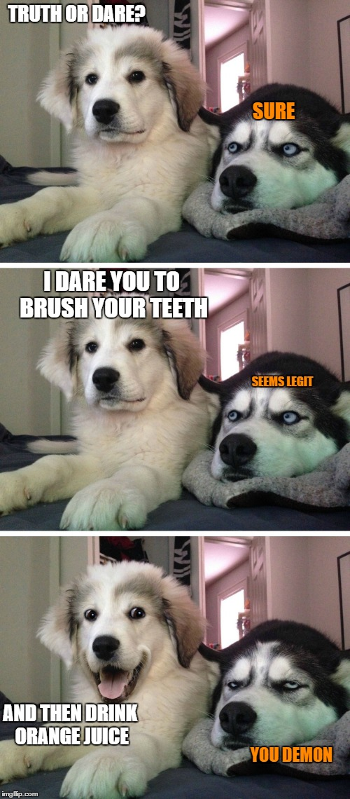 Bad pun dogs | TRUTH OR DARE? SURE I DARE YOU TO BRUSH YOUR TEETH SEEMS LEGIT AND THEN DRINK ORANGE JUICE YOU DEMON | image tagged in bad pun dogs | made w/ Imgflip meme maker