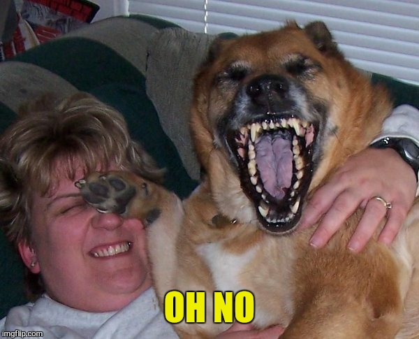 laughing dog | OH NO | image tagged in laughing dog | made w/ Imgflip meme maker