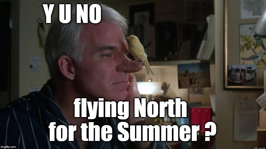 Steve Martin's pensive question. | Y U NO flying North for the Summer ? | image tagged in generous steve martin,y u no,y u no weekend,steve martin,migratory blues | made w/ Imgflip meme maker