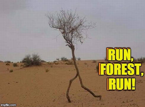 Forest Stump | RUN, FOREST, RUN! | image tagged in vince vance,tree running,trees,memes,funny memes,forrest gump | made w/ Imgflip meme maker