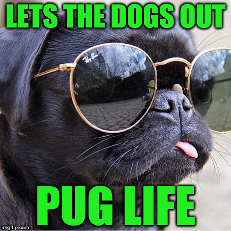LETS THE DOGS OUT PUG LIFE | image tagged in pug in glasses | made w/ Imgflip meme maker
