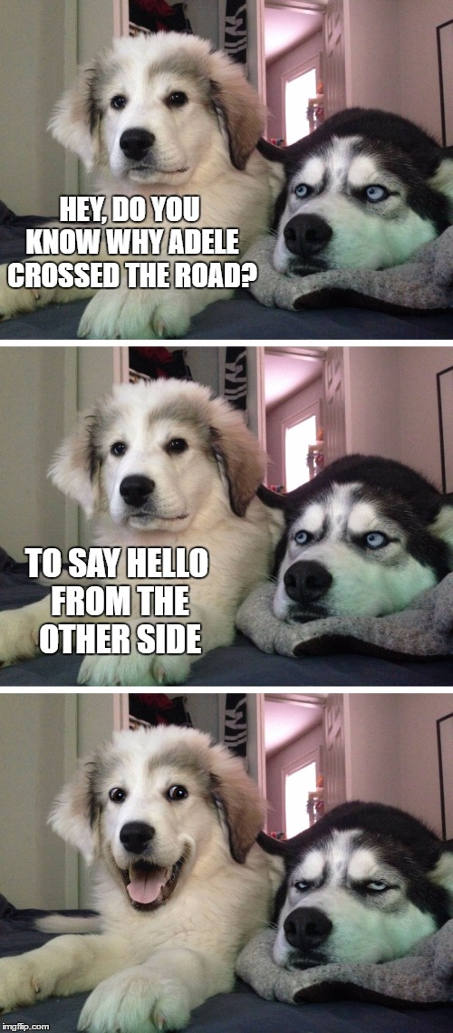 Bad pun dogs | HEY, DO YOU KNOW WHY ADELE CROSSED THE ROAD? TO SAY HELLO FROM THE OTHER SIDE | image tagged in bad pun dogs | made w/ Imgflip meme maker