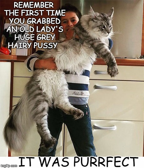 here kitty kitty  | REMEMBER THE FIRST TIME YOU GRABBED AN OLD LADY'S HUGE GREY HAIRY PUSSY IT WAS PURRFECT | image tagged in big pussy,memes,funny,cats | made w/ Imgflip meme maker