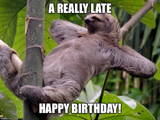 Lazy Sloth Imgflip