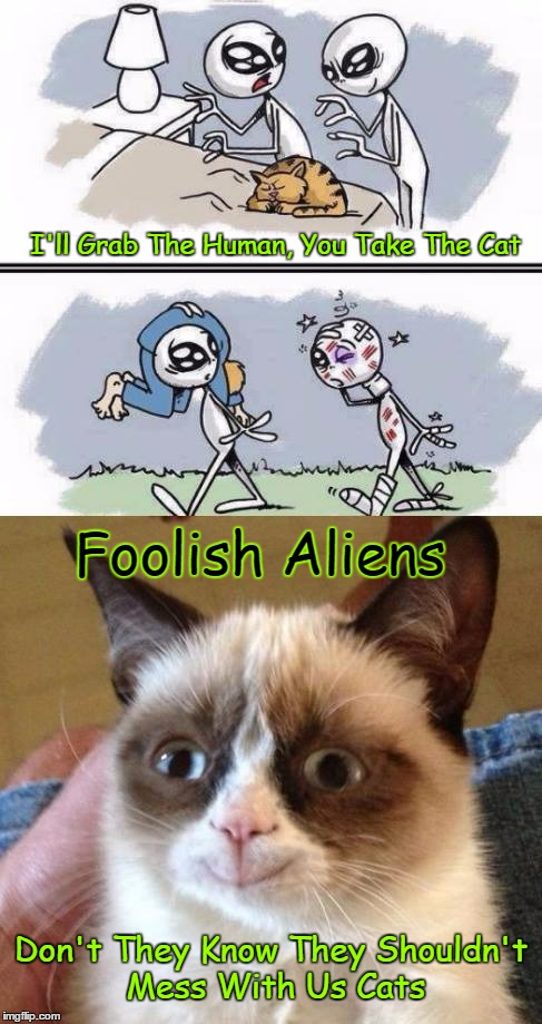Foolish Aliens....When Will They Learn ≥^.^≤ | I'll Grab The Human, You Take The Cat Foolish Aliens Don't They Know They Shouldn't Mess With Us Cats | image tagged in cats,grumpy cat,aliens abduction,aliens,google images,craziness_all_the_way | made w/ Imgflip meme maker