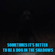 SOMETIMES IT'S BETTER TO BE A DOG IN THE SHADOWS | made w/ Imgflip meme maker