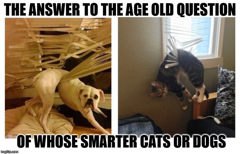 Dumb N Dumber | THE ANSWER TO THE AGE OLD QUESTION OF WHOSE SMARTER CATS OR DOGS | image tagged in caught up,dos idiots,dumb and dumber idea,we are both stupid,i'm just hanging,hanging out | made w/ Imgflip meme maker