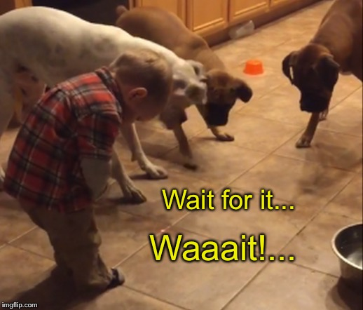 Wait for it... Waaait!... | made w/ Imgflip meme maker