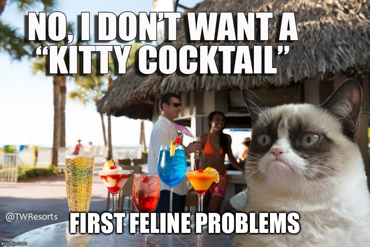 FIRST FELINE PROBLEMS | made w/ Imgflip meme maker