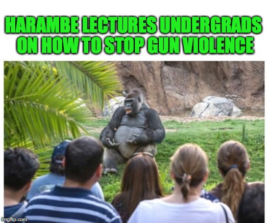 HARAMBE LECTURES UNDERGRADS ON HOW TO STOP GUN VIOLENCE | image tagged in legendary harambe,gun control | made w/ Imgflip meme maker