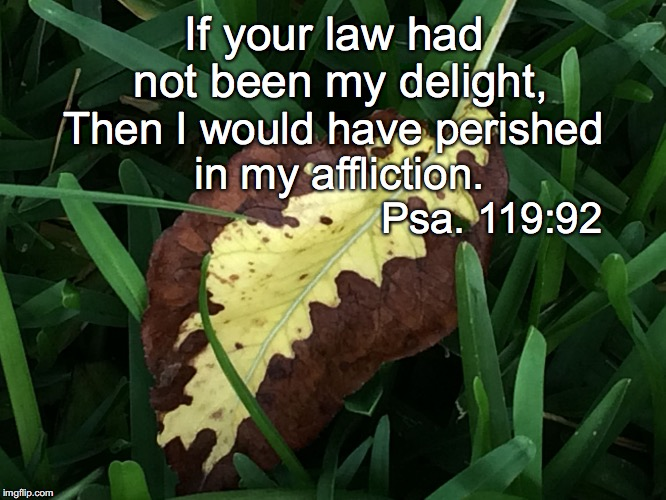 If your law had not been my delight, Then I would have perished in my affliction. Psa. 119:92 | image tagged in delight | made w/ Imgflip meme maker
