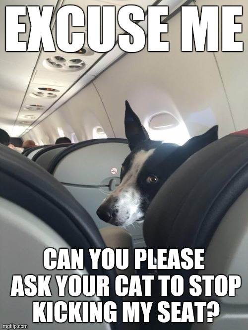 It's going to be a long flight | EXCUSE ME CAN YOU PLEASE ASK YOUR CAT TO STOP KICKING MY SEAT? | image tagged in memes,cats,dogs,funny,airline seats,stop kicking my seat | made w/ Imgflip meme maker